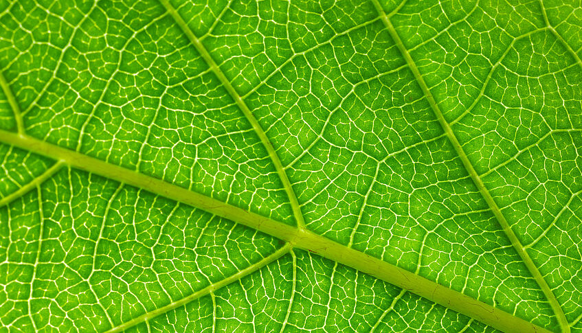 Structures of a leaf